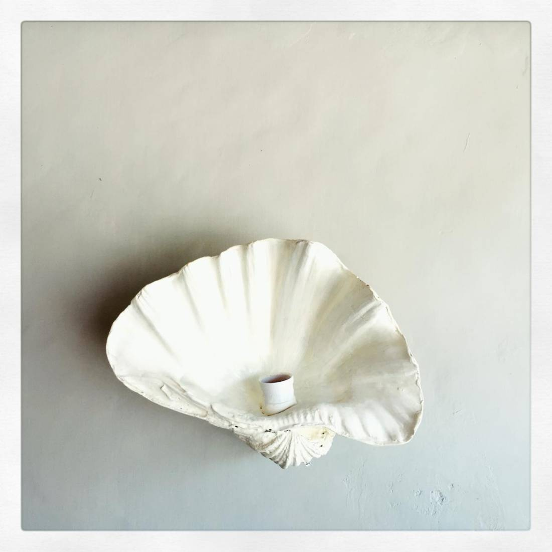 Fluted Shell Wall Sconce- White